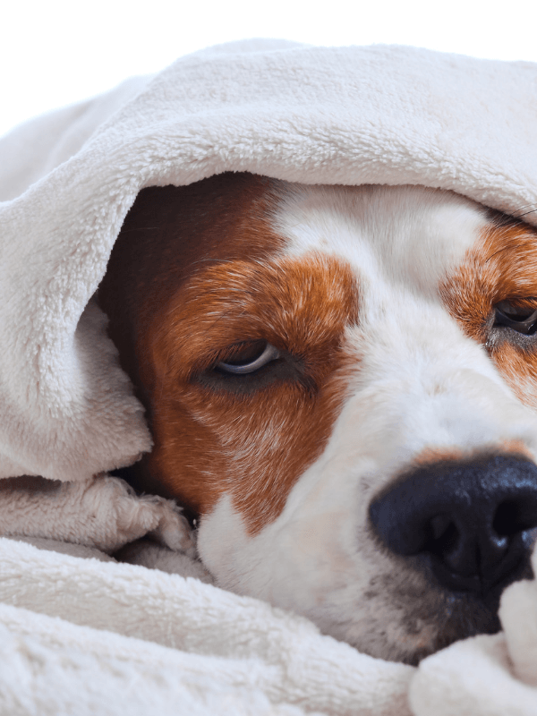 My dog threw up, now what? We get this one quite often - so we take a deep dive into... yup, vomit! The Pet Lifestyle Guru